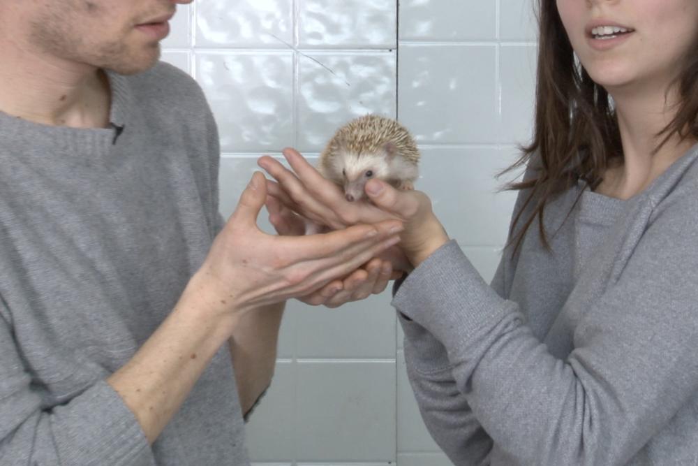 hedgehog02.png