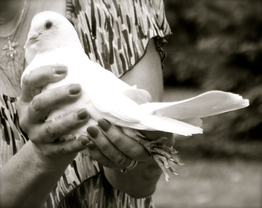 Before releasing the doves, the dove-lady walked around the circle of guests and invited each of us to touch one of them and say goodbye to Chloe.