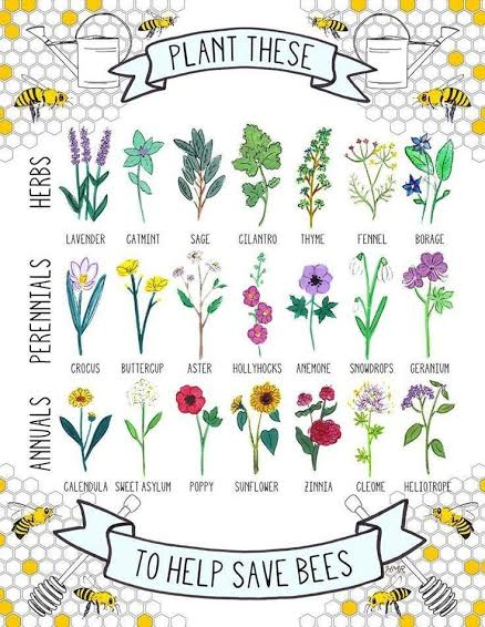 Save the Bees | Plant flowers | Spirit de la Lune Honey Moon Ceremony