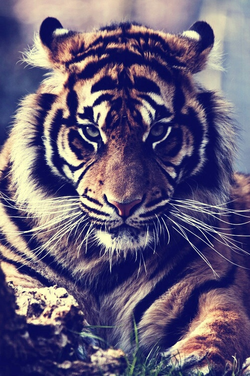 animals-background-be-fearless-motivation-Favim.com-3637497.jpg