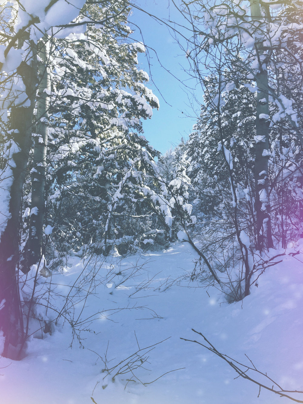 Snow Covered Forest | Spirit de la Lune