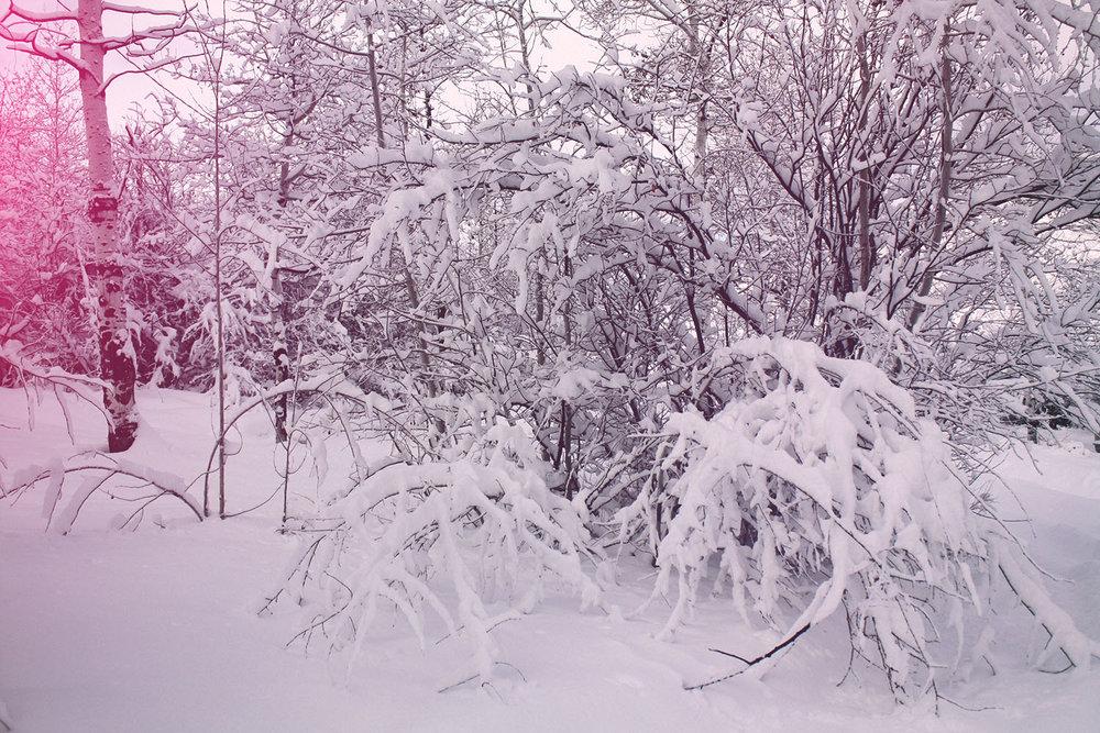 Snowy Forest | SPirit fe la Lune