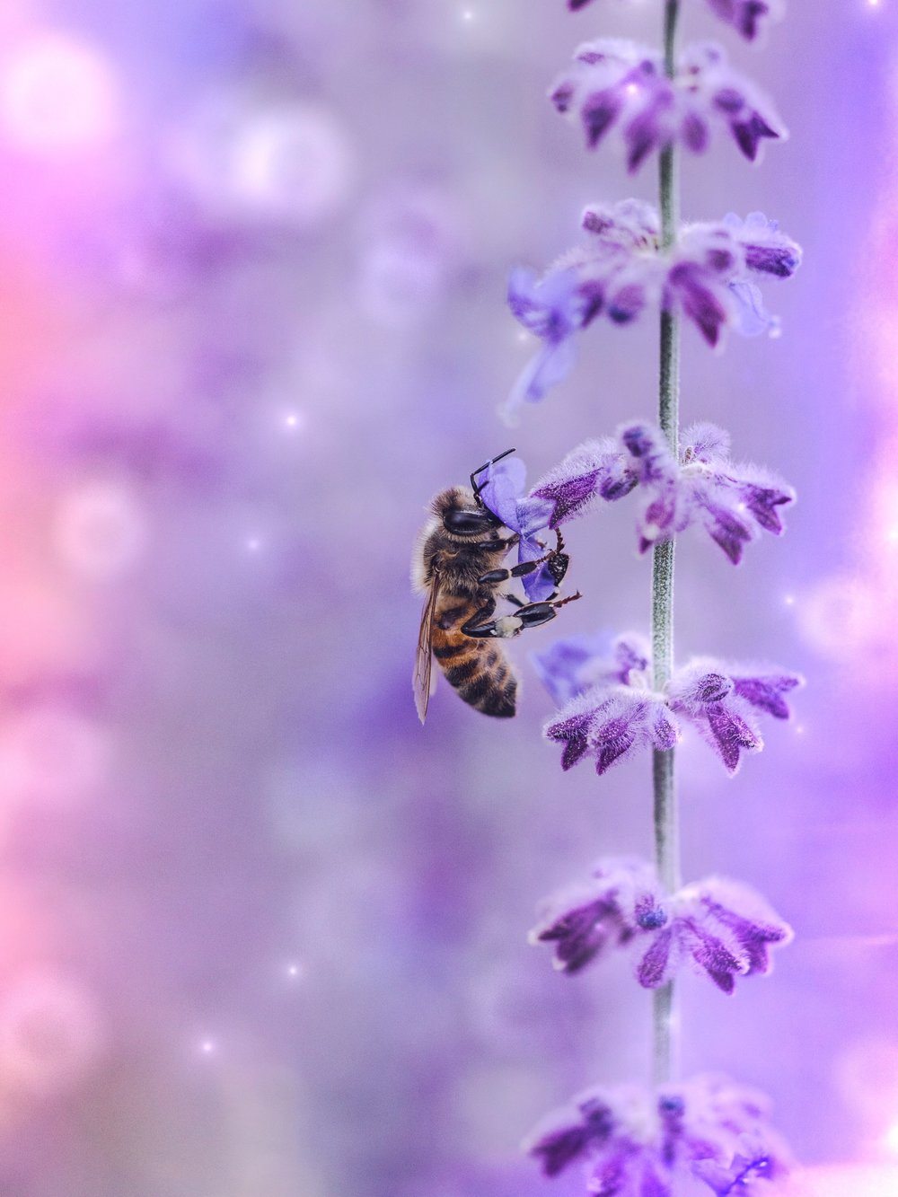 Full Honey Moon Bee | Spirit de la Lune