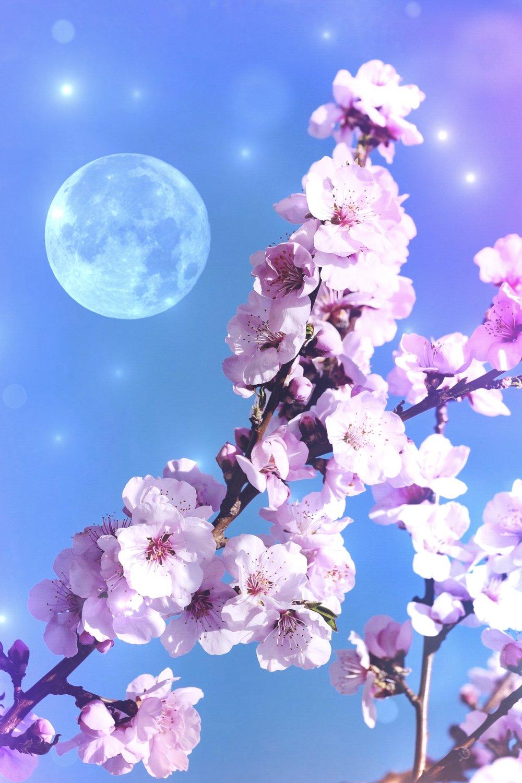 New Moon in Aries| Spirit de la Lune Flower Moon Cycle Energy Reading