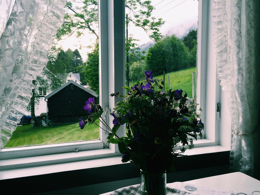 Flowers in our Airbnb, Isfjorden, Norway.