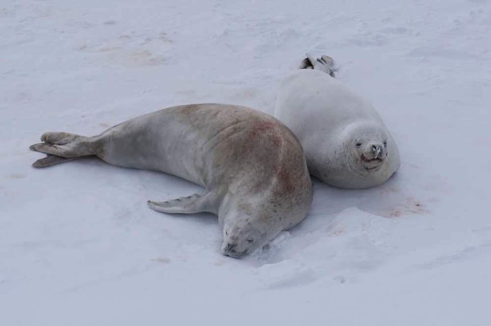 Antarctica Seals.jpg