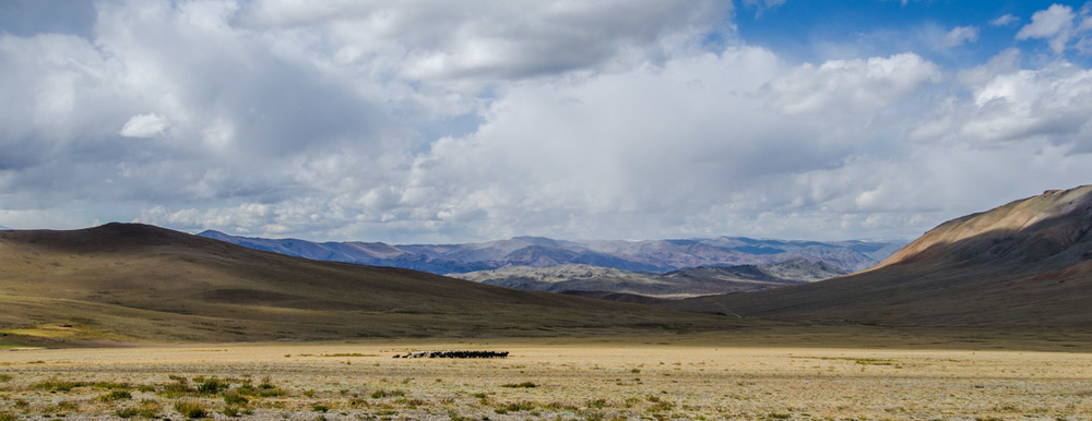 Very typical scene in Western Mongolia with a mixed herd of yaks, goats, horses and sheep.