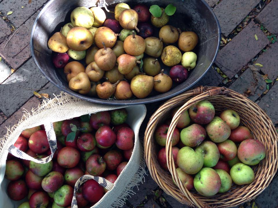 OrchardHouse_PicAppleHarvest.jpg