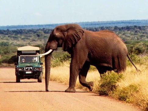 Kruger park2.jpg