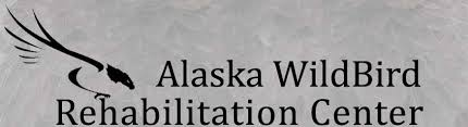 Local Plunge Grant Goes To Alaska Wildbird Rehabilitation Center 3.jpg