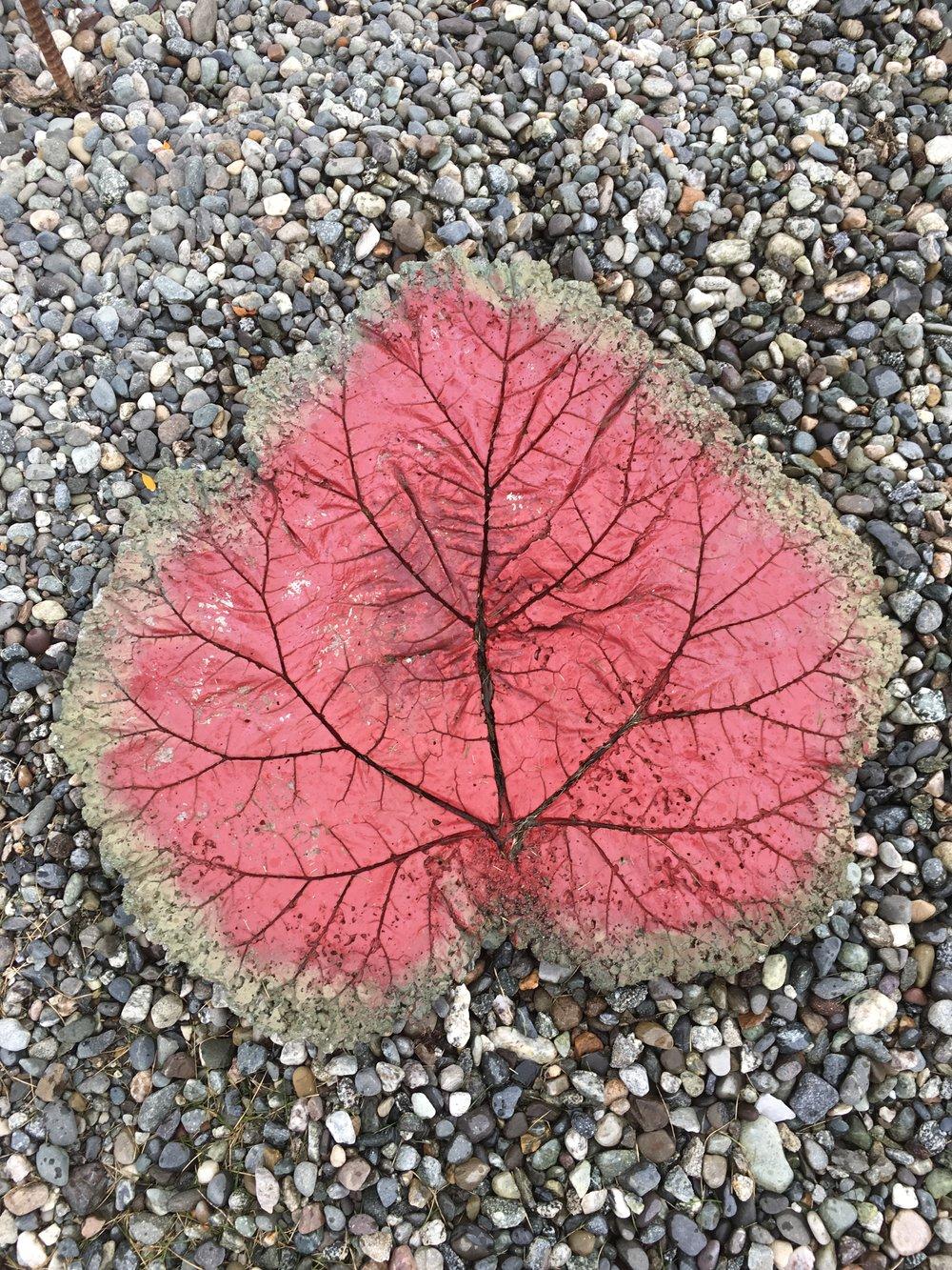 Summer Rhubarb