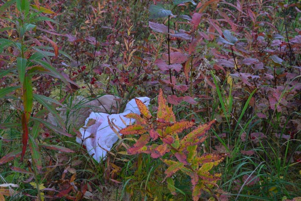 Fall Colors & Plastic