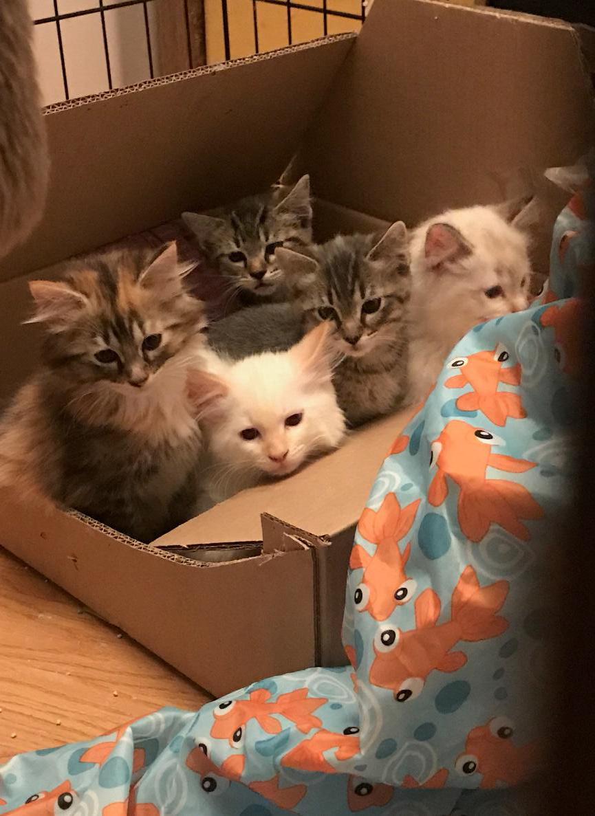 PETS & ANIMALS - A Box of Kitties.jpg