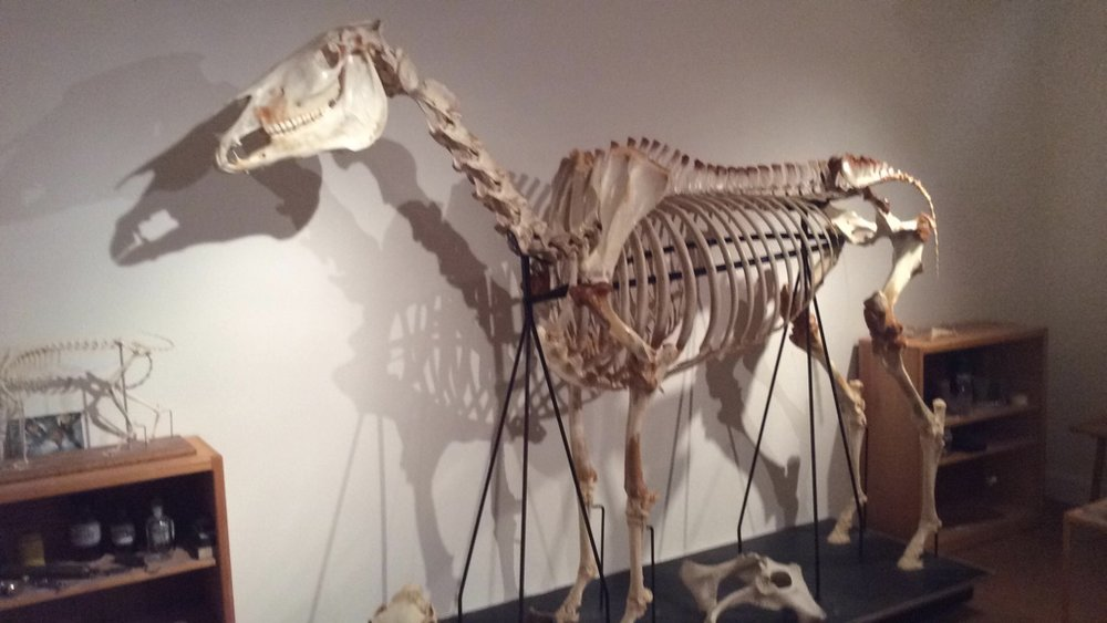 COMMUNITY - Remembering An Animal Industry Pioneer & Her Husband (Horse Skeleton).jpg