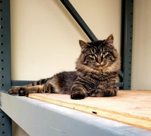 PETS & ANIMALS - Adopt Valeris WEB.jpg