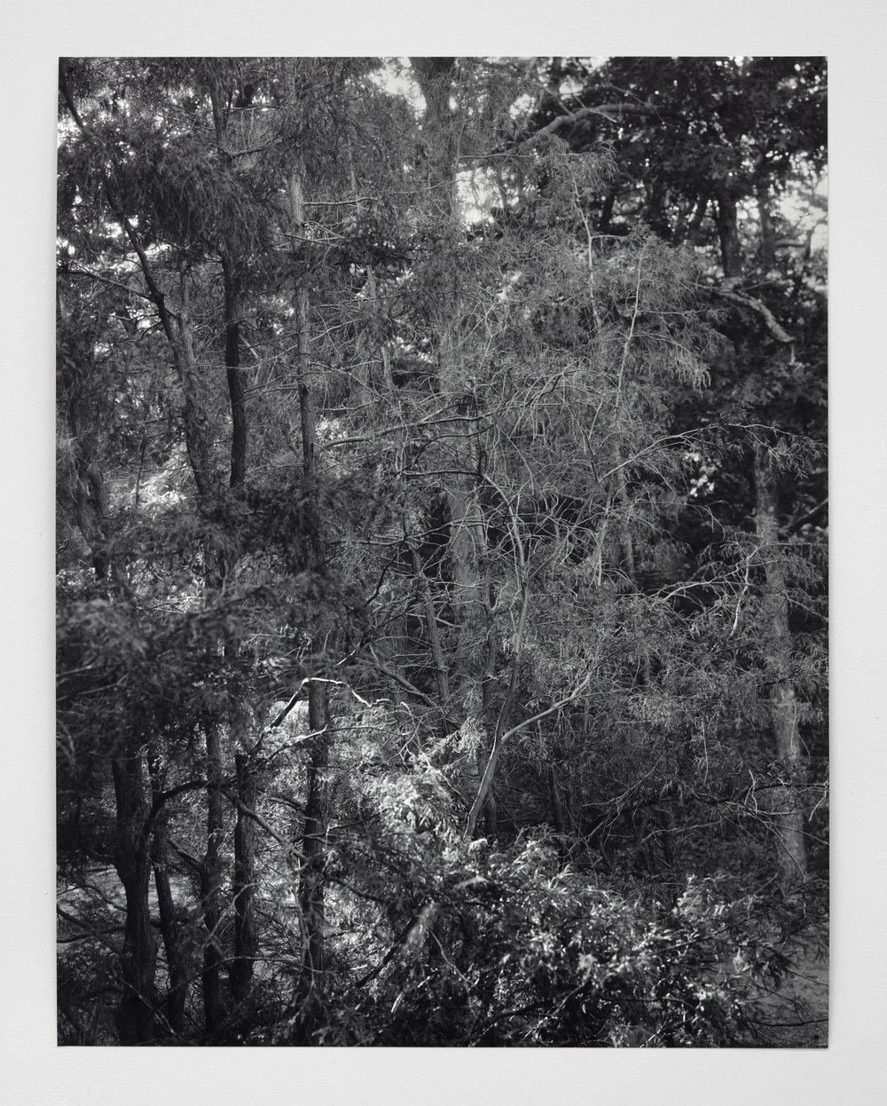 Wayland Wood (2016)