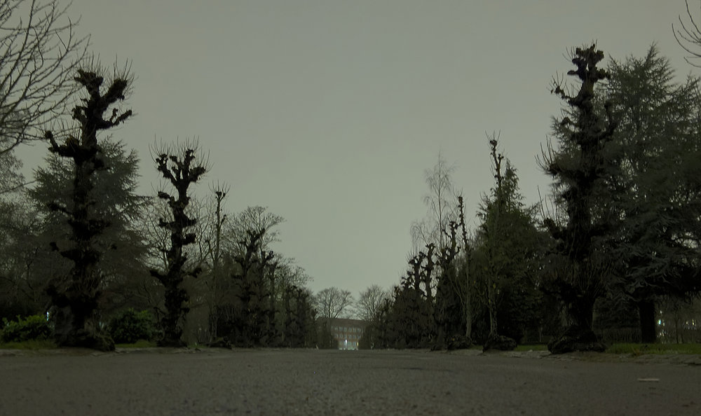 runjmrun aarhus dec 3 2018 trees.jpg