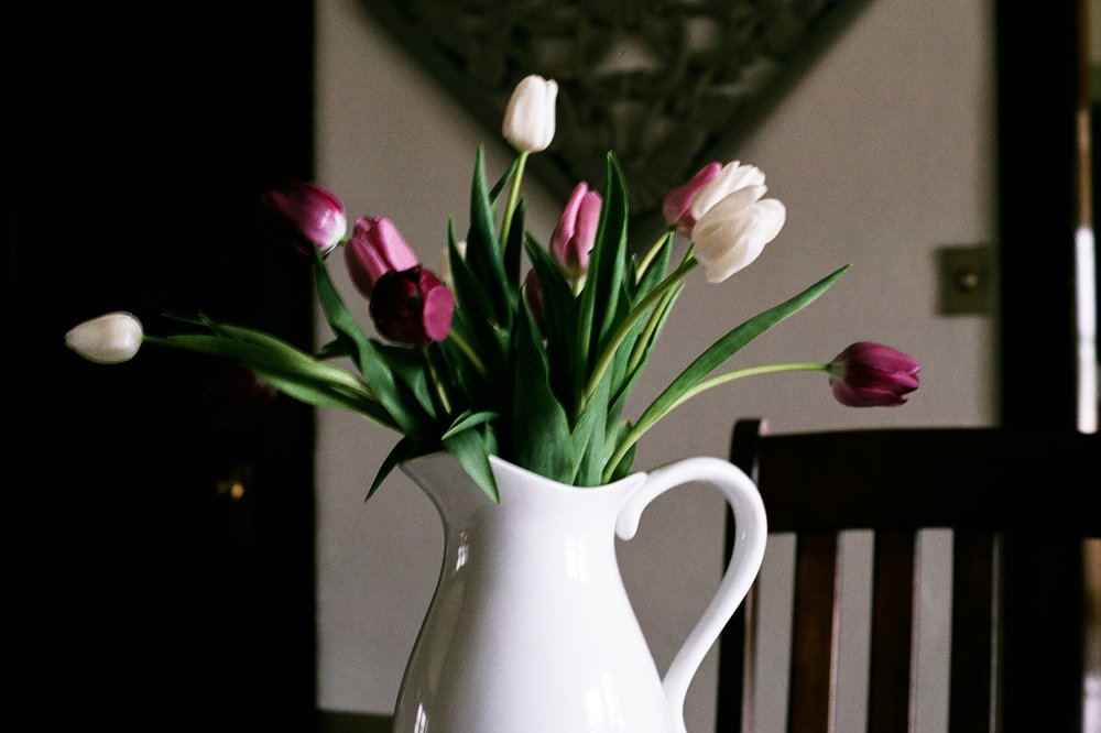 tulips. Idaho Avenue Studios. natural light. film. fuji 400.