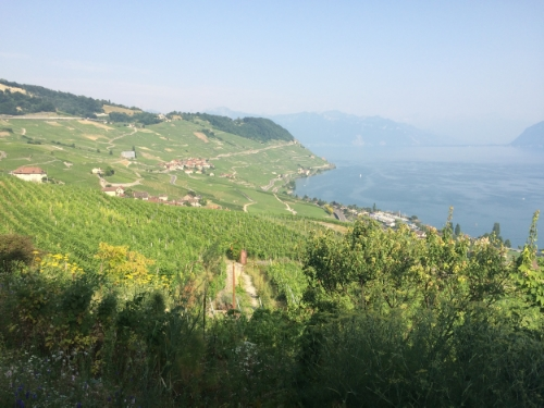 Terraced vineyards that skirt Lake Geneva/Lac Leman just a couple of kilometers outside of Lausanne, Switzerland, the place we called home over the last three and a half years. #nofilter