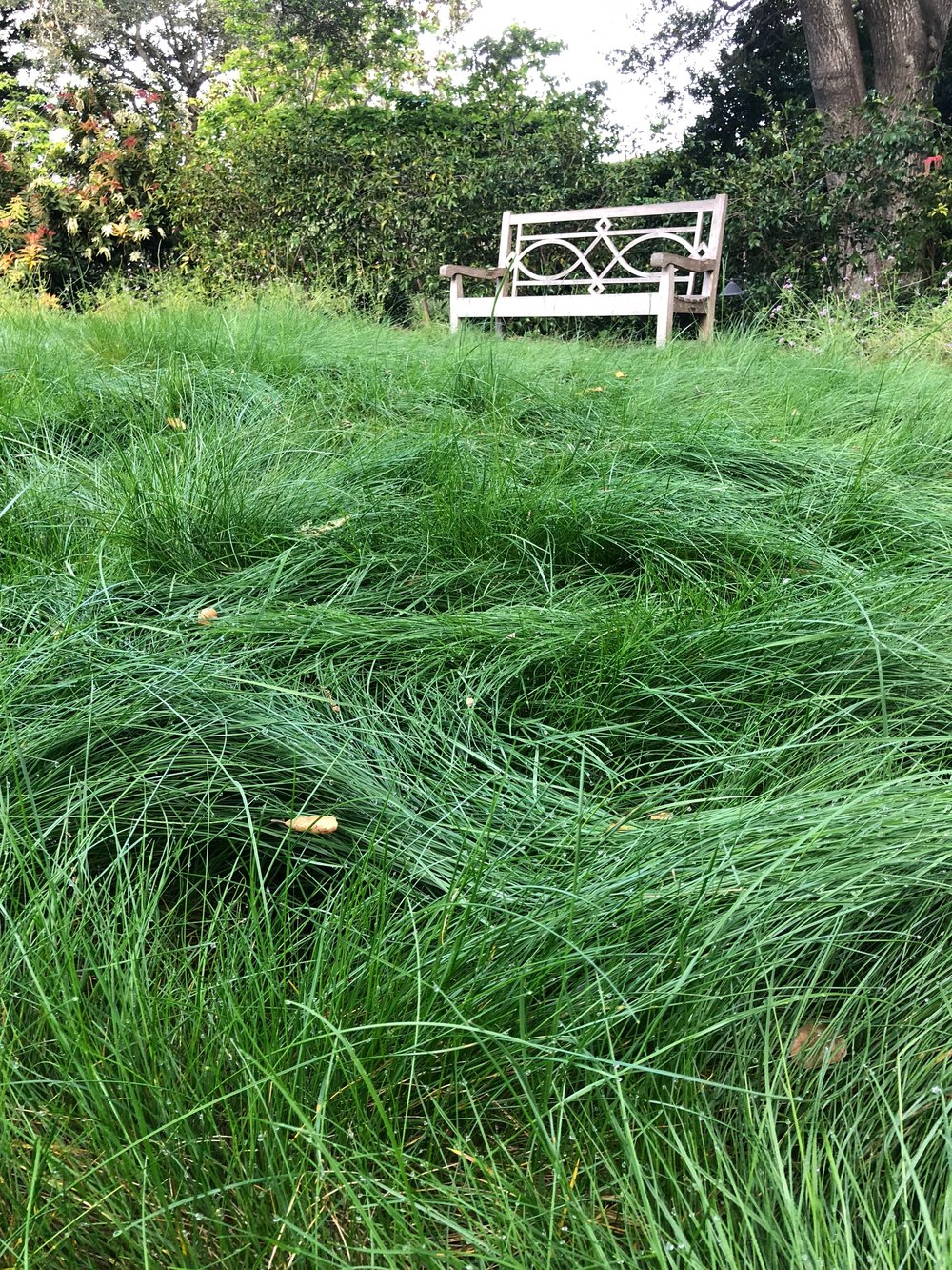 Diana Meadow Grass2.jpg