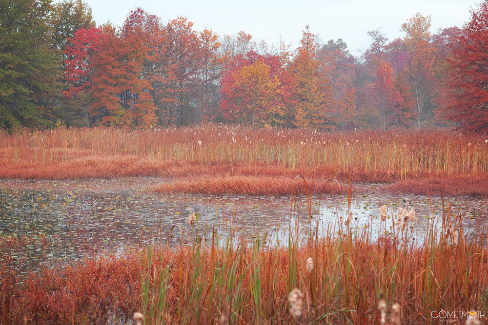 Great Swamp October Logo.jpg