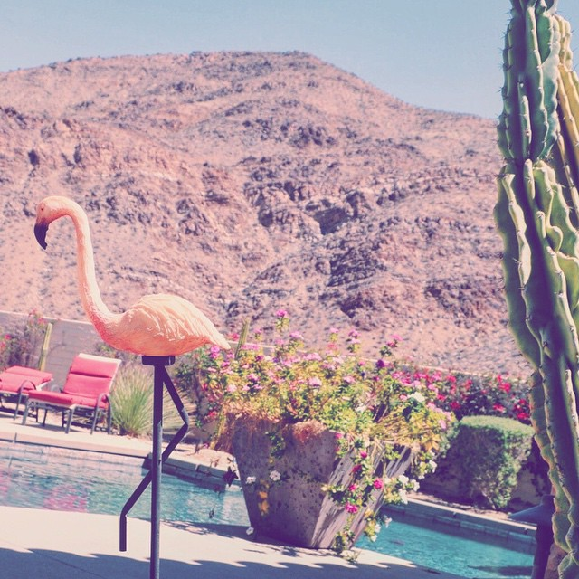 Casa de Magers #nationalpinkday #flamingo #pink #vsco