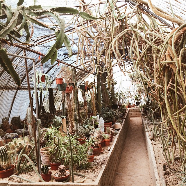 Greenhouse goals (at Moorten Botanical Garden Showplace)