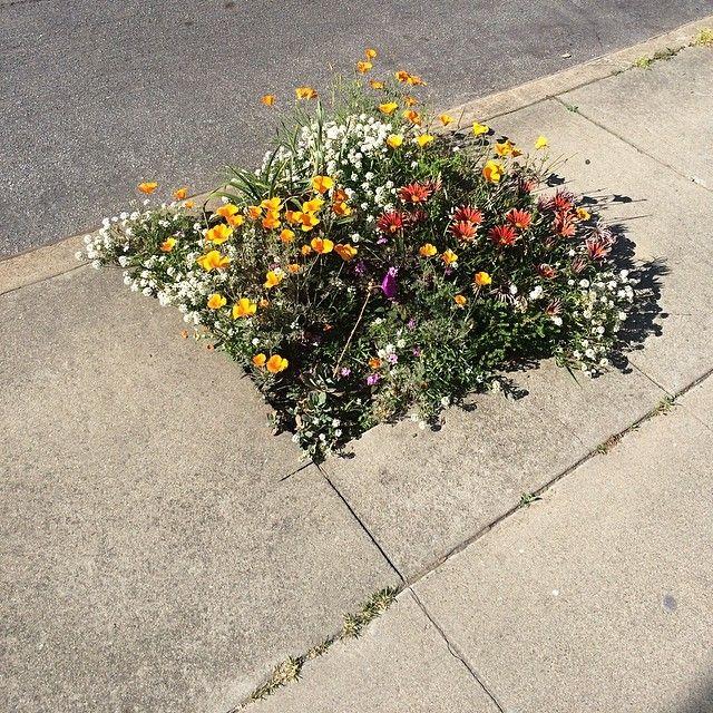 gypsylolita: Street Garden