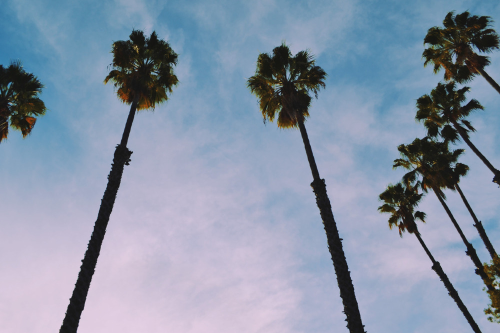 Palm Trees & 80 Degrees