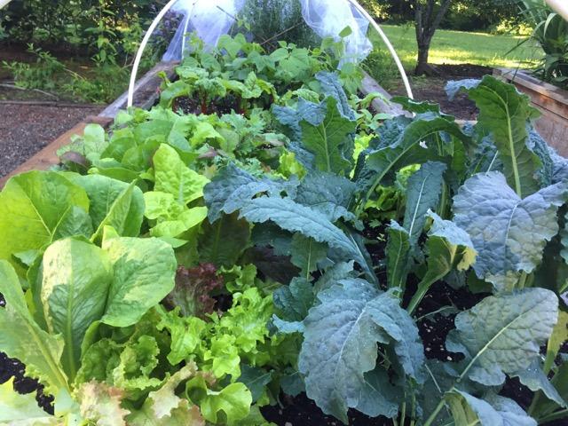 M Joyce garden.jpeg