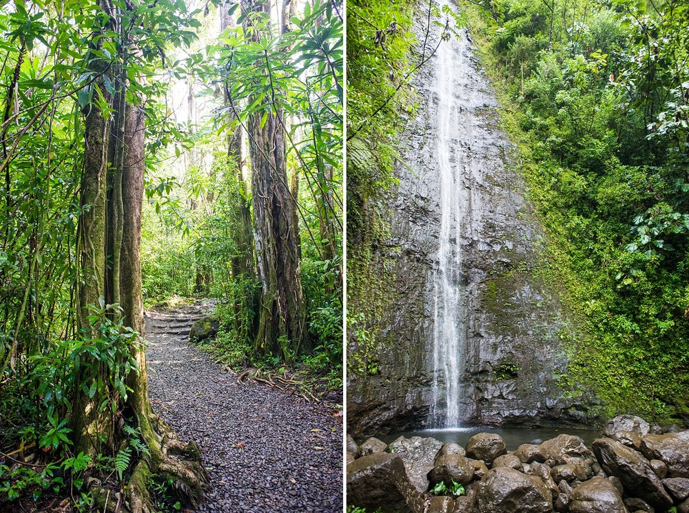 Manoa Falls hike for an elopement, engagement, or adventure session photo shoot