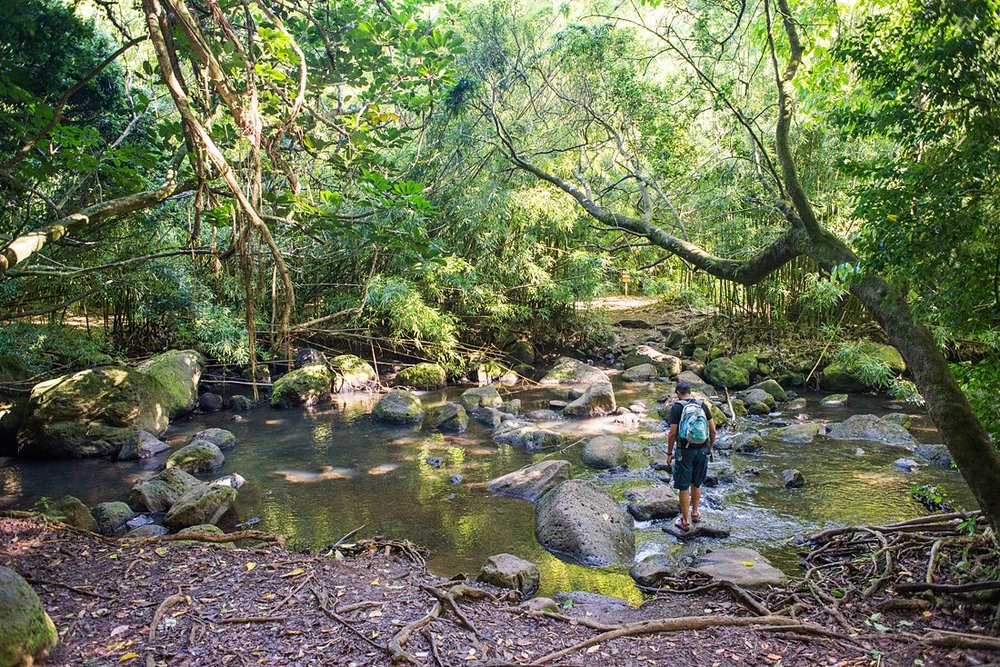 Crossing a beautiful rocky stream on the Judd Trail on Oahu. A serene and gorgeous location to elope that's not a beach!