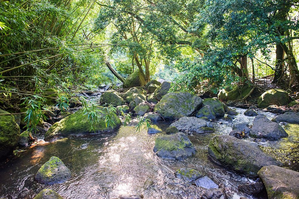 A stream on the Judd Trail in the tropical forest is a great location for an adventurous elopement in Hawaii