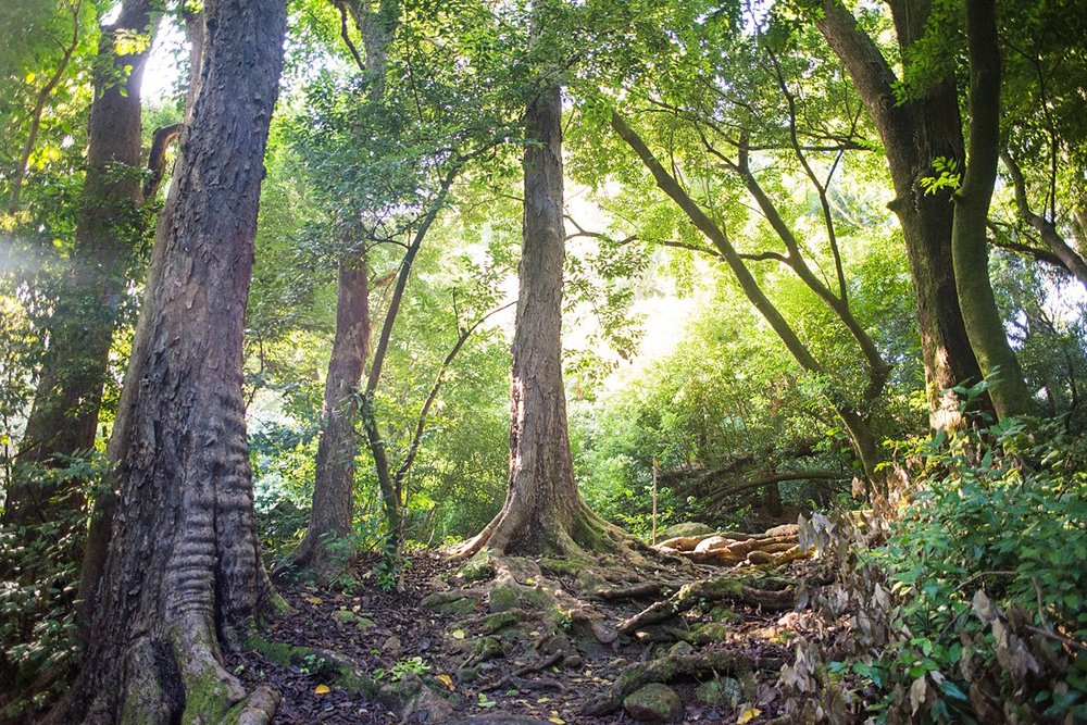 Hike through the tropical forest on the Judd trail for your adventurous elopement on Hawaii