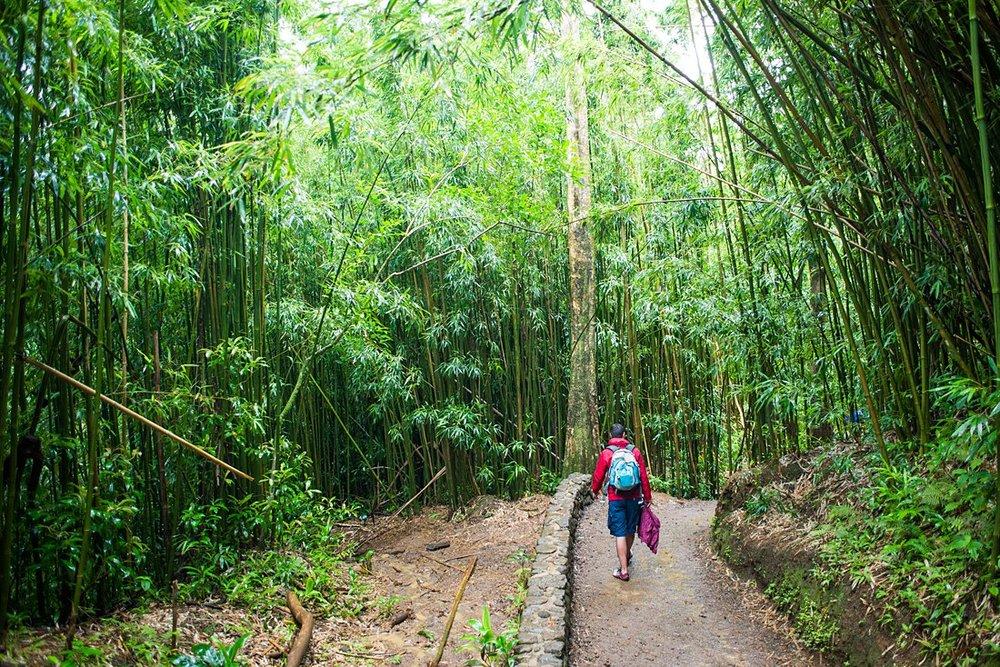 Manoa Falls hiking trail through the rainforest is beautiful for a non beach elopement