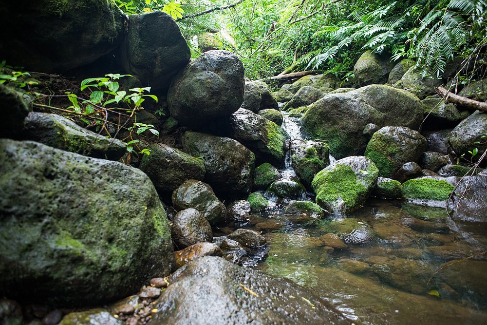 Small waterfall cascades on the trail to Manoa Falls. A beautiful location to elope in Hawaii