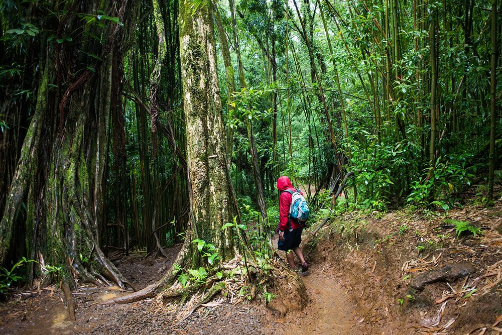 The trail to Manoa Falls is gorgeous and the perfect location for an adventurous Hawaiian elopement!