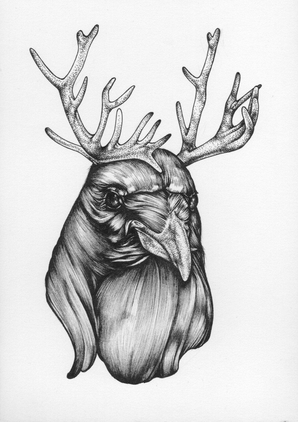 owlfacer - 1.jpg