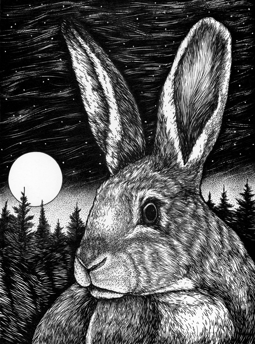 Star Gazing Rabbit