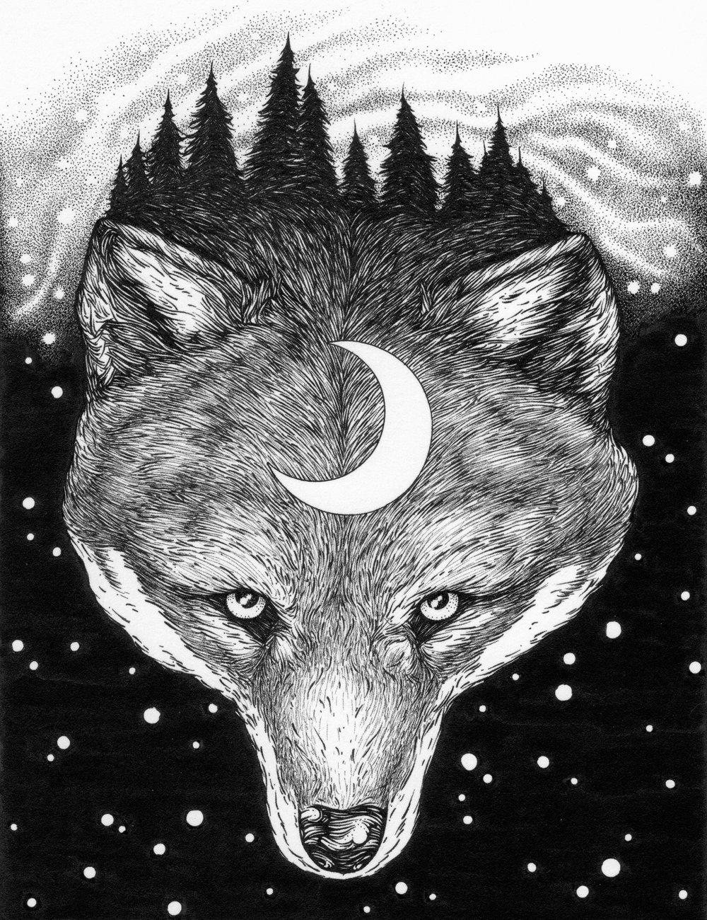 foxweb - 1.jpg