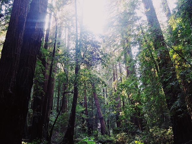 beach or forest?? It's a hard forest for me (although I was highly annoyed by the very loud tourists disturbing my attempt at peace!) #majestic #redwoodforest