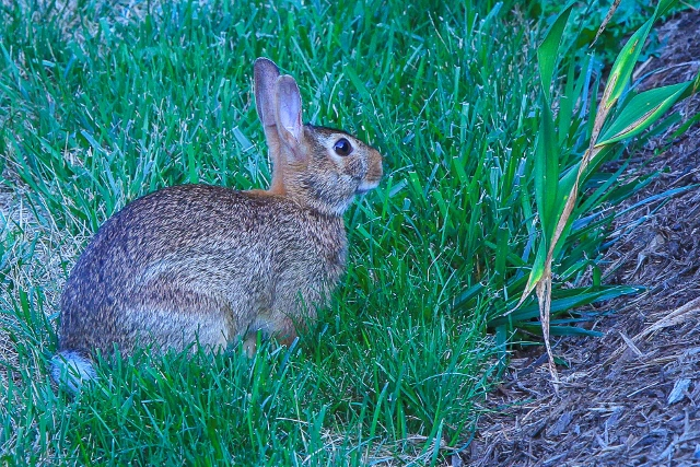 Favorite-Things-Spring-Rabbit