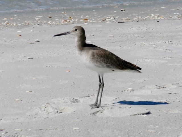 Sanibel Island FL via Leslie Reese