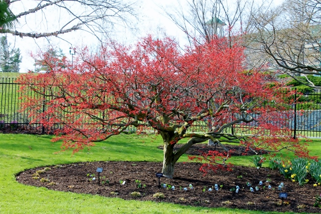 Spring Color at the Hershey Gardens Via Leslie Reese (10)