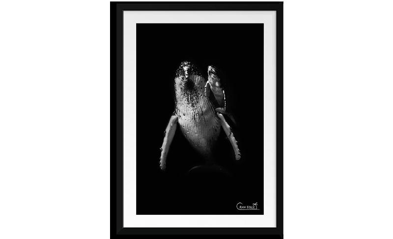 raw-edge-photo-frames-junior.png