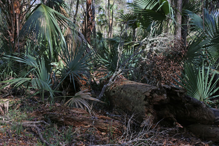 MarshallSwamp8.jpg
