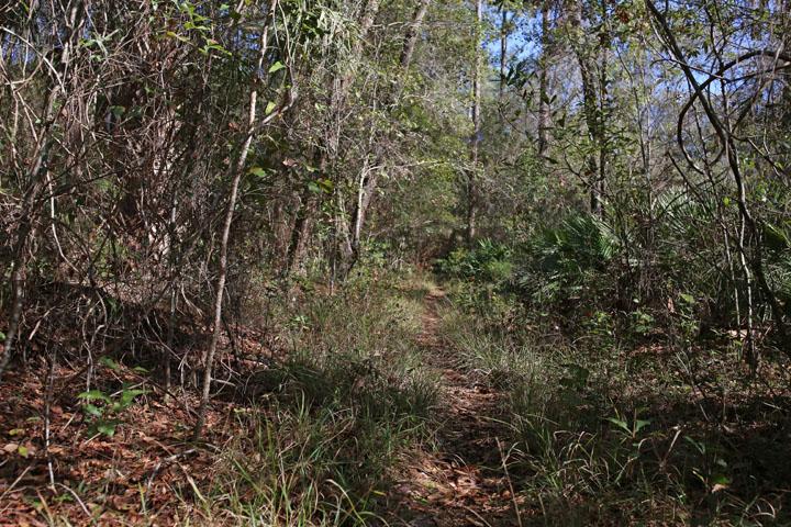 MarshallSwamp3.jpg