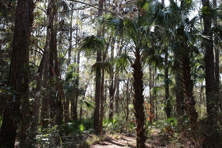 MarshallSwamp2.jpg