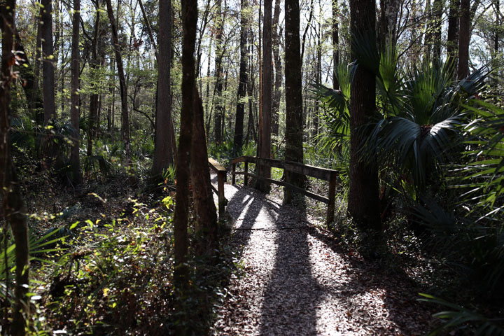 MarshallSwamp15.jpg