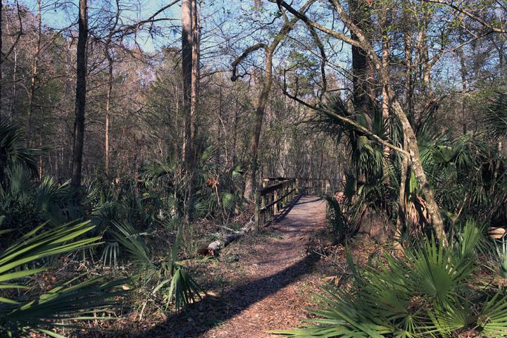 MarshallSwamp10.jpg